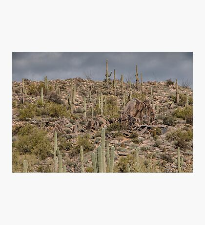 Saguaros on the Hill Photographic Print