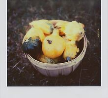 the gourd harvest by Jill Auville
