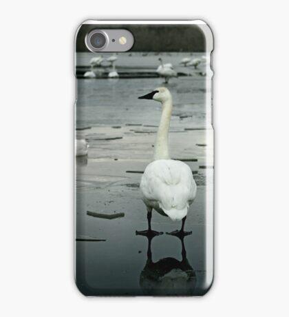 Trumpeter Swans of Heber Springs, AR - 1 iPhone Case/Skin