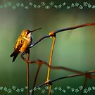 Ruby-throated Hummingbirds by Janice Carter                         by Janice Carter