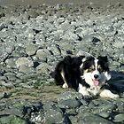 Laddie Rocks. by Michael Haslam