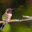 Autumn Ruby-throat by Janice Carter