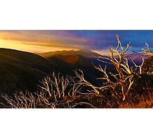 Mt Hotham Brush Photographic Print