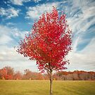 Single Lone Autumn Tree by David Lamb