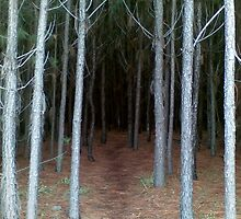 Into the Forest by Sheridon Rayment by BlueMoonOwl