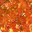 it is all orange by ANNABEL   S. ALENTON
