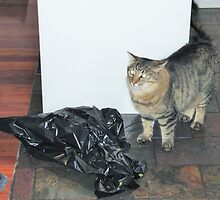 'WHO ME!' I didn't touch it. Bruce's Cat.  by Rita Blom