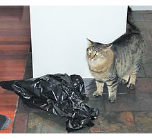 'WHO ME!' I didn't touch it. Bruce's Cat.  Photographic Print