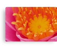 Looking Inside a Pink Water Lily  Canvas Print