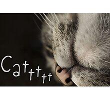 Cattttt Photographic Print