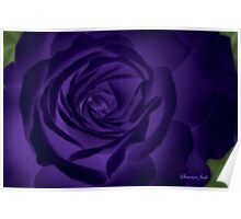 Here in My Deep Purple Dream ~ Rose Poster