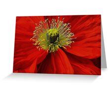 Poppy. Greeting Card