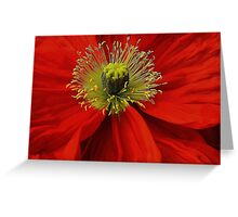 Poppy. Greeting Card