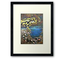 Australian  Corroboree Frog from a Pastel Painting  Framed Print