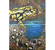 Australian  Corroboree Frog from a Pastel Painting  Photographic Print