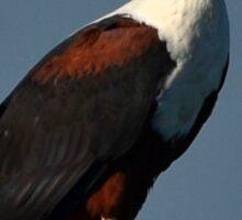 Perched Eagle Sticker