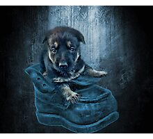ADORABLE GERMAN SHEPHERD PUPPY IN BOOT PICTURE,PILLOW,TOTE BAG, Photographic Print