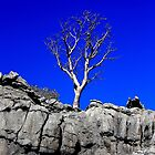 Boab tree. by Ian Ramsay