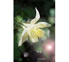 Magical Columbine ~ Must Be Fairies Photographic Print