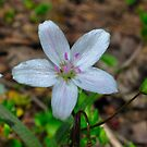 Woodland Wildflower by michaelasamples