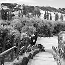 Winery view by zumi