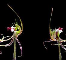 Dancing Orchid Mug by Paul Piko