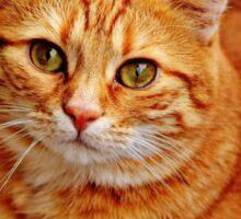 Cute Orange Cat Sticker