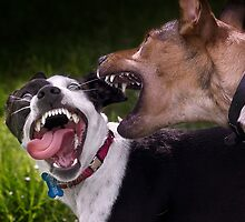 Dogs with game face on .9 by Alex Preiss