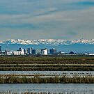 Vic Fazio Wildlife Refuge, Sacramento, the Sierra Nevadas by Maurine Huang