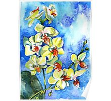 Watercolor yellow summer orchid on blue background Poster