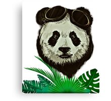 Panda Bear Wildlife Canvas Print