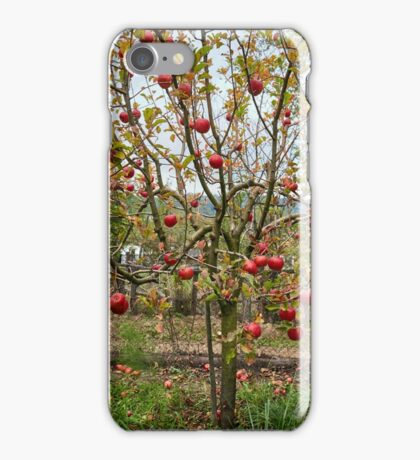 Apple tree in the orchard iPhone Case/Skin
