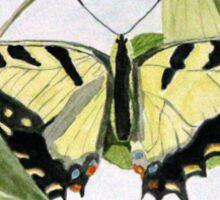 Male Eastern Tiger Swallowtail Sticker