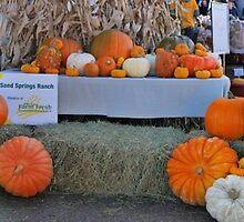 Pumpkin panorama by Darbs