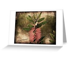 Callistemon (aka BottleBrush) Greeting Card