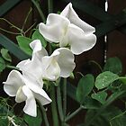 Fresh and Pure - Raindrops on Sweet Peas by BlueMoonRose