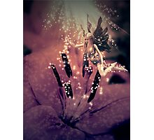 Fairy and flower Photographic Print