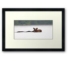 The Following - Moose, Algonquin Park, Canada Framed Print