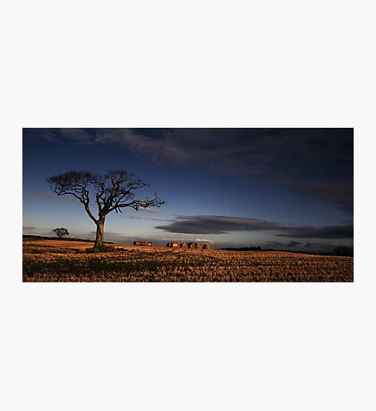 A Tree, What A Character! Photographic Print