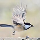 Chickadee departure by Laurie Minor