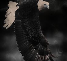 Eagle by franceslewis