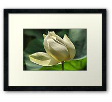 Hope equal Lotus Framed Print