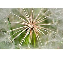 Heart Of A Dandelion Photographic Print