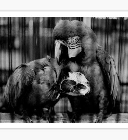 Parrots Sticker