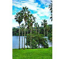 Waokele Pond Palms and Sky  Photographic Print