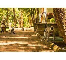 Monkeys on the Path Photographic Print