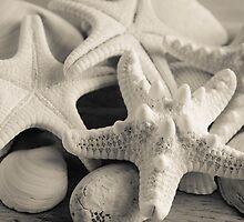 White Starfish Black and White by andreaanderegg