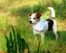 My Sweet Little Decker Dog by NatureGreeting Cards ©ccwri