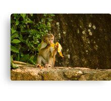 Typical Monkey Canvas Print