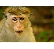 Monkey Stare Photographic Print